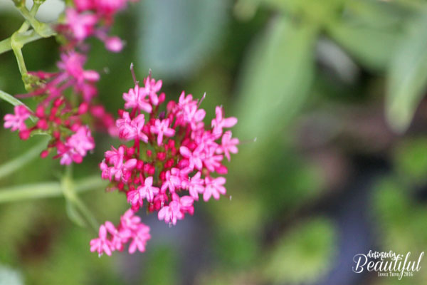 fall-pink-small-flowers