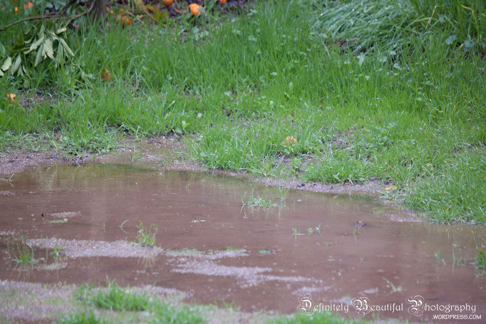 rain backyard pond